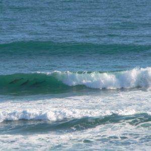 Dolphins in Wilderness Ocean